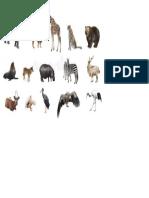 Animales Alvajes