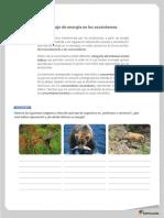 Flujo de energía en los ecosistemas.pdf