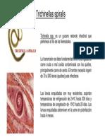 Trichinella Spiralis OMAR