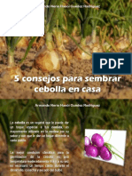 Armando Nerio Hanói Guédez Rodríguez - 5 consejos para sembrar cebolla en casa