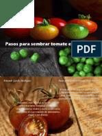 Armando Guédez Rodríguez - Pasos para sembrar tomate en un huerto
