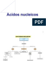 A Nuclei Cos