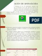 Clasificación de Aminoácidos