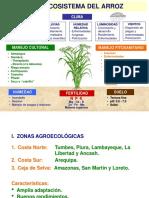 - Agroecosistema Del Arroz