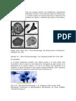 Las Archaea