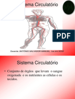 Sistema Circulatorio1ss