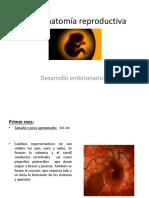 Fisio Anatom a Reproductiva Izchel