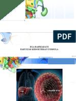 PPT Hepatitis Febri