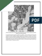 Mini Atlas de Microestructuras