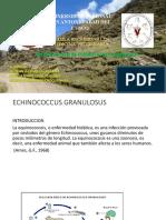 ECHINOCOCCUS EN SICUANI COMBAPATA PERU