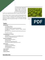 Fractal.pdf