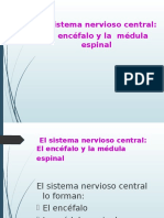 Anatomia Sistema Nervioso