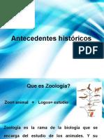 Antecedentes (zoologia)