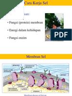 Kuliah-3_KERJASEL-RESPIRAISELULAR.pdf