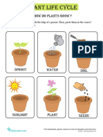 Plant Life Cycle Cards