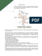 Mecanisme renale