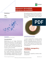 Blastomyces dermatitidid 2017