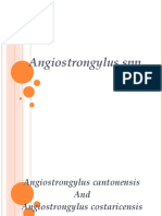 Angiostrongylus.ppt