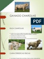 Ganado Charolais y Charbray
