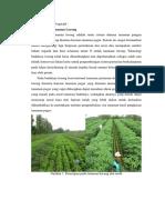 Aplikasi Metode Vegetatif