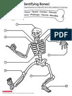 Identifying Bones!