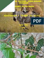 Adaptación y Nicho Ecologico 2018_ESEN