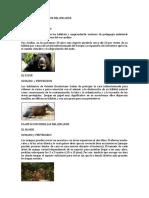Animales Vertebrados Del Ecuador