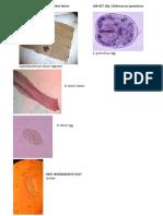 LAB ACT 12 - Diphyllobothrium latum.pdf