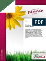Dianthus-plante de Balcon Si Gradina