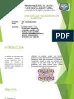 biotecnologia catalsa