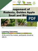 module-10e-management-of-rodents-golden-apple-snail-and-birds-presentation.pptx