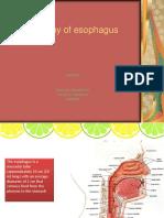 Anatomy of Esophagus