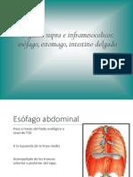 Organos Supra en Inframesocolicos