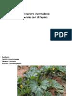 Calabacín y Diferencias Con El Pepino