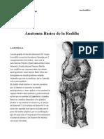 Rodilla. Anatomía