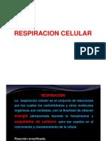 3. Glucolisis y Ciclo Krebs