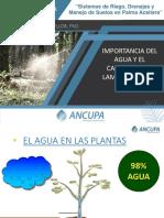 Agua y las Plantas