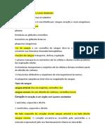 SISTEMA CARDIOVASCULAR HUMANO.docx