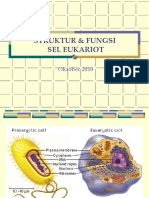Struktur Dan Fungsi Eukariot Ima