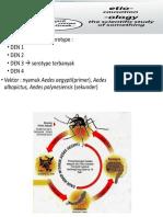 P2M DBD - Etiologi - Siklus Hidup