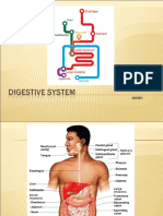 digestivesistem-131009110715-phpapp01