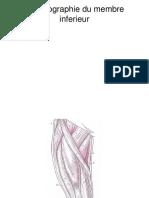 Topographie Du Membre Inf.