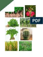 gambar tumbuhan.docx