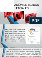 Formacion de Tejidos Faciales (2019)