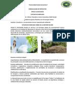 consultora deforestacion