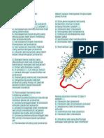 Soal Biologi Bab Bakteri