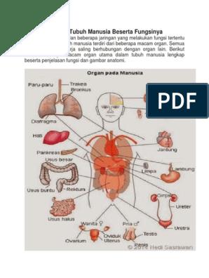 8 Organ Tubuh Manusia Beserta Fungsinya