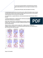Transcript Neuro Diseases Embryology