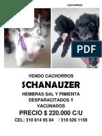 Vendo Cachorros Schanauzer