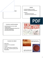 Clostridium.pdf
